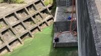 某ダムにてアオコの回収作業を行いました!